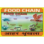 Food Chain Model | Science Working Models for Educational Purpose